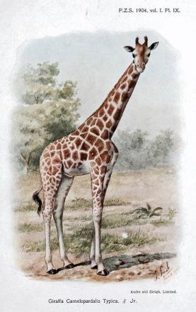 Animal - Camel 1-639x1024 2.jpg
